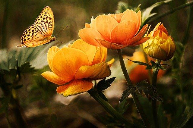 Arti Bunga Lily dan Hal-Hal Tentang Bunga Lily yang Belum Diketahui Banyak Orang