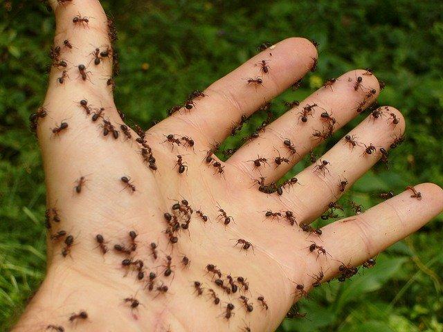 Jangan Panik, Cek di Sini Cara Mengeluarkan Semut dari Telinga Secara Aman